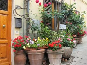 Tuscan sidewalk garden